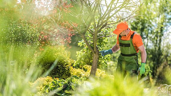 garten- und Baumpflege in Großmehring