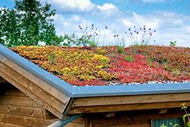 dachbegrünung in Großmehring